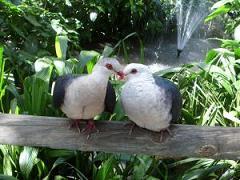 PigeonLovers
